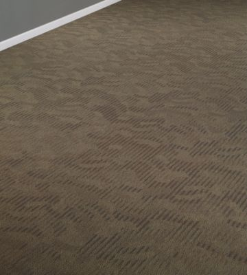 No Rules Collection Shaw Contract Commercial Carpet